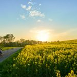 A motorcyclist rides towards the sunset on a country road surrounded by rapeseed fields, meadows and trees.